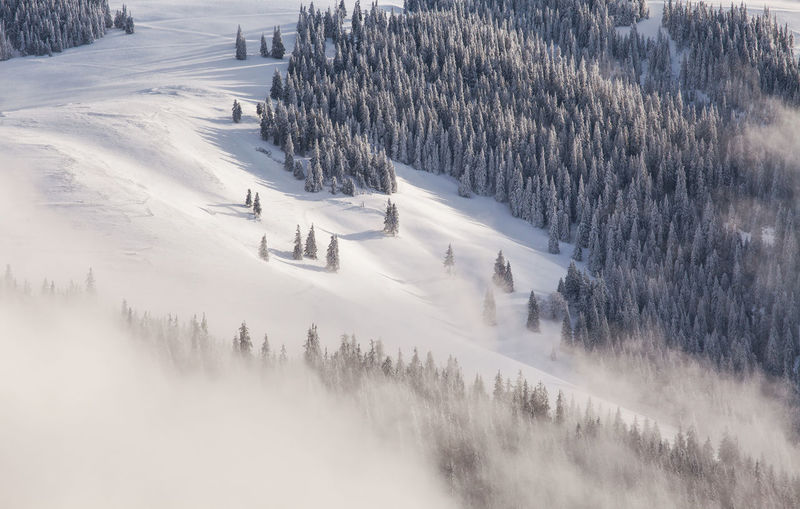 Foggy winter morning in Rodnei Mountains, Romania. Beautiful Carpathians EyeEm Best Shots EyeEm Nature Lover Morning Nature Trees View Winter Beauty Cold Temperature Fog Foggy Forest High Angle View Landscape Mountain Mountain Range Mountains Outdoors Pine Tree Season  Snow
