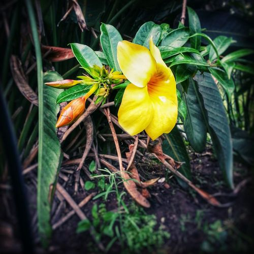 Life in a nutshell....... Growth Timelapsephotography Flower flower Plant Leaf Nature Growth Yellow Close-up No People Outdoors Beauty In Nature Fragility Day Flower Head Freshness
