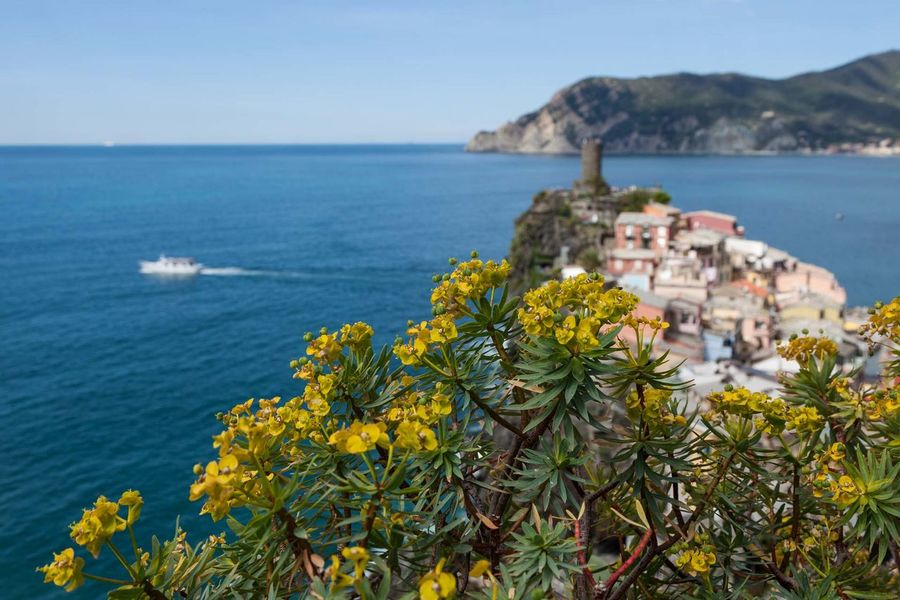 5 Terre Beauty In Nature Clear Sky Close-up Day Flower Flower Head Horizon Over Water Liguria Mediterranean  Mountain Nature No People Outdoors Plant Scenics Sea Sky Tranquil Scene Tranquility Travel Destinations Water