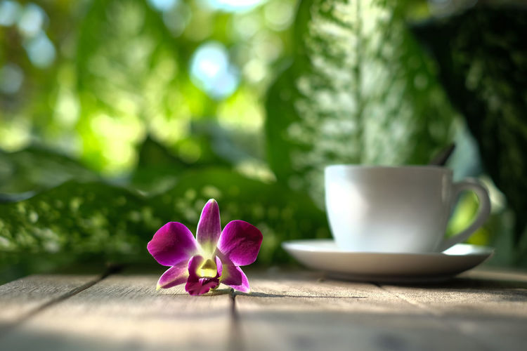 White coffee mug and orchid flower on wooden floor,blur background White Glass Coffee Green Nature Photography Orchid Wooden Table Art Close-up Coffee Break Coffee Cup Crockery Cup Drink Flower Flowering Plant Food And Drink Freshness Leaf Mug Nature No People Plant Refreshment Table Wooden
