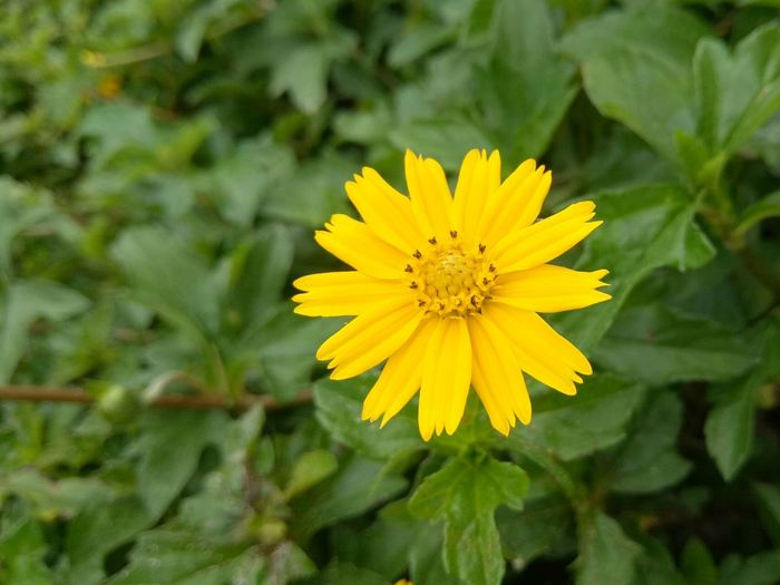 Yellow flower Beauty In Nature Blooming Blooming Flower Flower Growth Nature No People Outdoors Plant Yellow