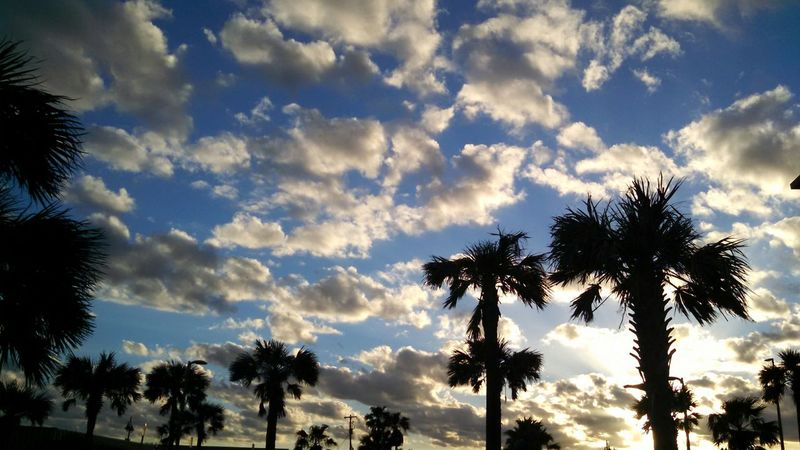 Palm Tree Cloud - Sky Tree Sky Silhouette Low Angle View Dramatic Sky Tree Trunk Outdoors Nature Sunset No People Tranquility Beauty In Nature Scenics Day Blue Tree Area