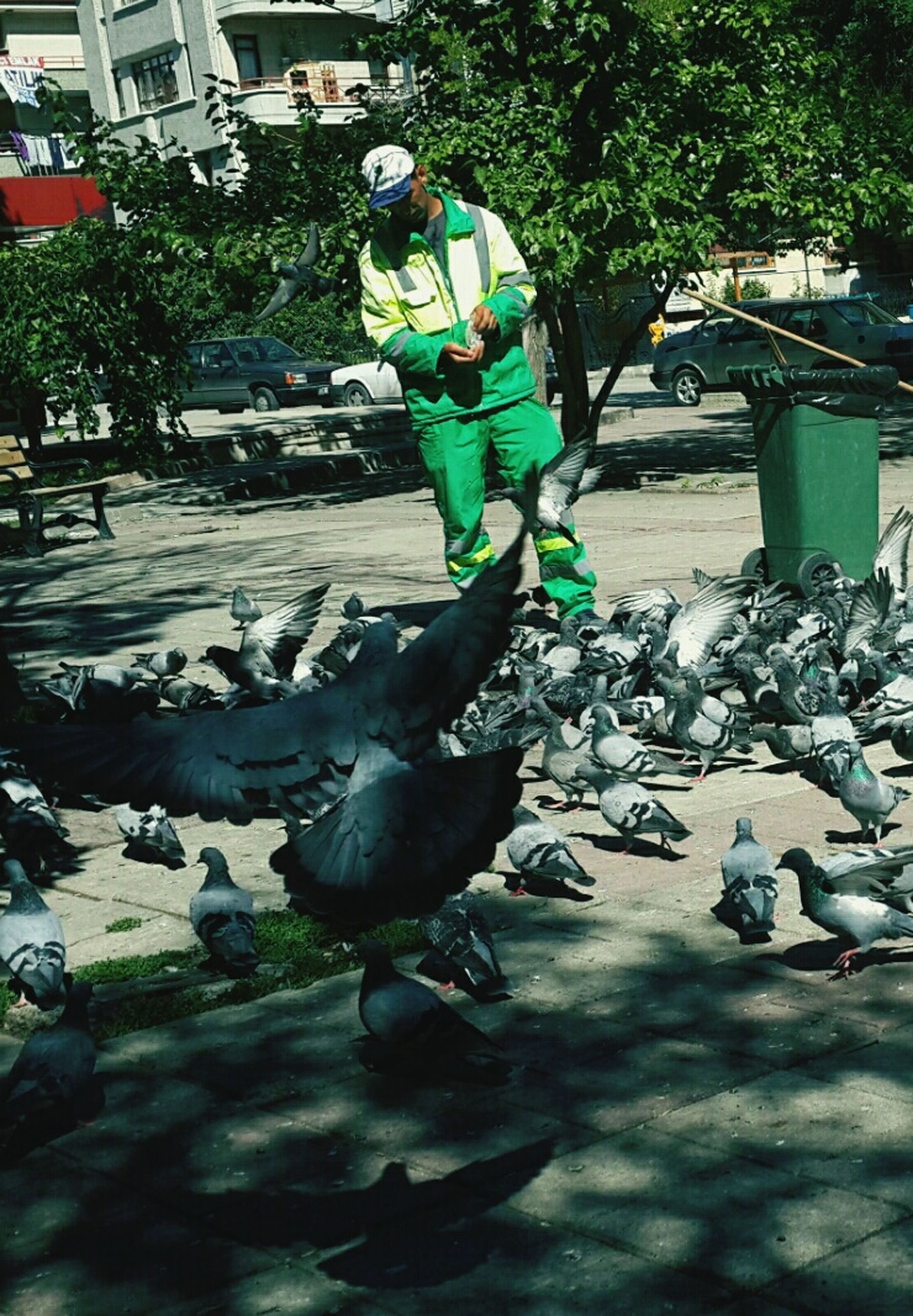 bird, full length, animal themes, lifestyles, men, walking, animals in the wild, leisure activity, wildlife, tree, childhood, day, outdoors, person, pigeon, motion, rear view