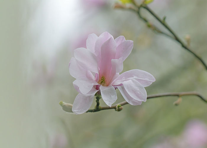 Close-up of pink flower on tree