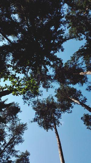 Skies Trees Natural Beauty