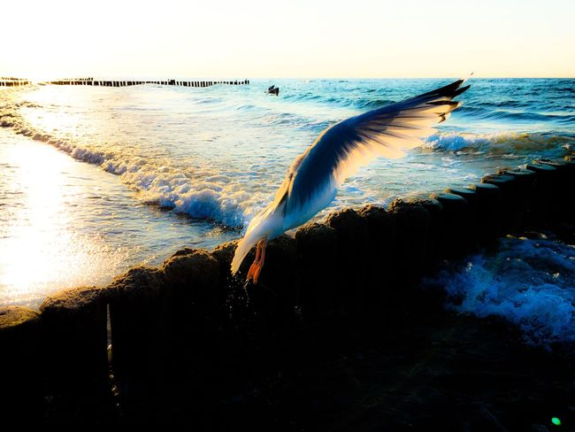 Sea Water Nature Animal Themes Beauty In Nature Horizon Over Water One Animal Bird Outdoors No People Scenics Beach Day Sky