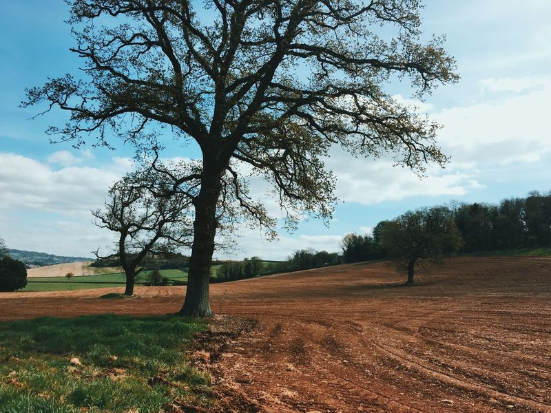 Tree Nature Landscape Beauty In Nature Tranquil Scene Tranquility Growth Sky Field Scenics Rural Scene Plowed Field Agriculture Outdoors No People Day Single Tree