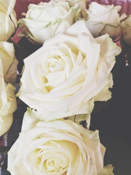 Vintage Roses ♥️
