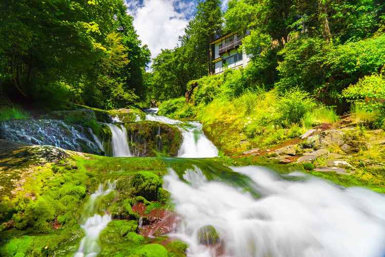 Stream flowing on moss covered rocks against trees