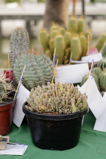 Close-up of potted plants on table for sale