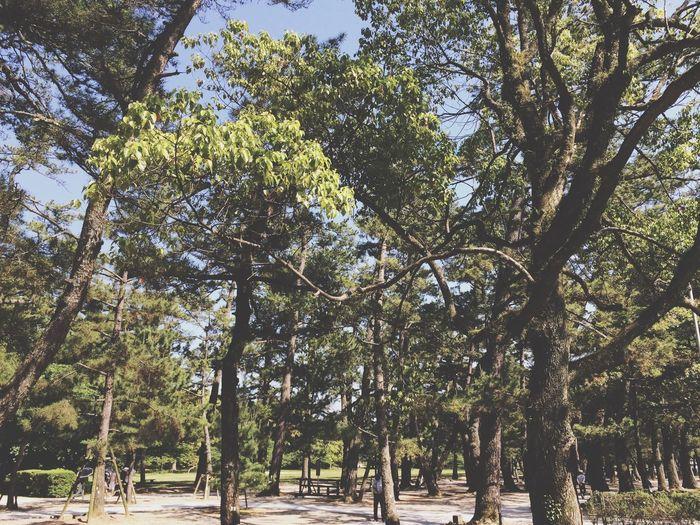 Tree Beautiful Nature
