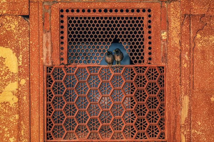 Two small birds resting on a small window opening in zafar mahal in red fort. new delhi, india.