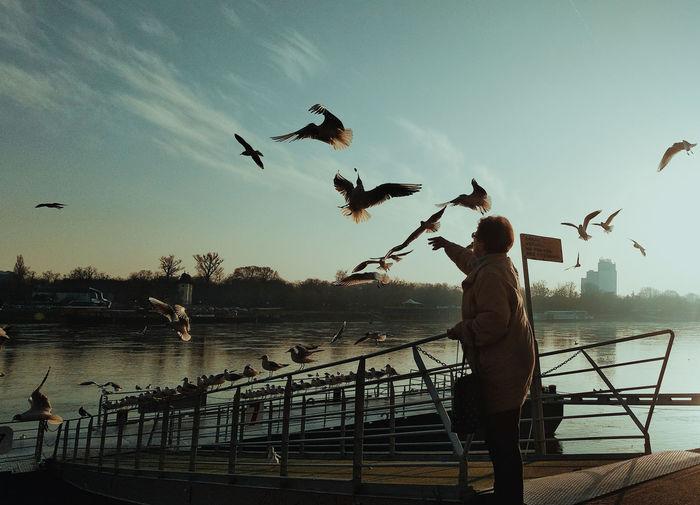 Bird Flying Spread Wings Working Occupation Full Length Men Mid-air Silhouette Flock Of Birds