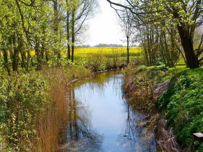 Springtime in Ostfriesland-Northern Germany-North Sea ... :-) Beauty In Nature Day Eastfrisia Friesland Grass Growth Nature Nature Art Nature Art Photography No People Norddeutschland Nordsee North North Germany North Sea Ostfriesland Ostfriesland Kultur Ostfriesland Landschaft Outdoors Reflection Scenics Spring Springtime Tree Water