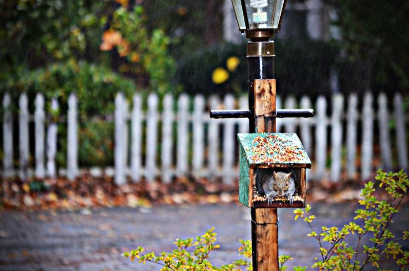 Focus On Foreground No People Squirrel Wooden Post