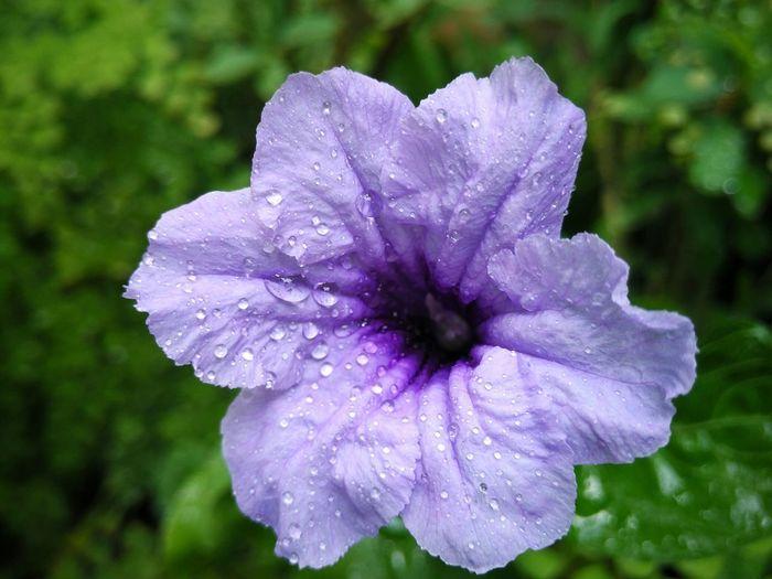 💜 Purple
