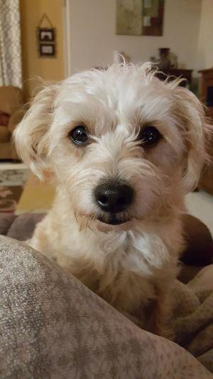 Taking Photos PuppyLove Puppyeyes Sweet Cute Pets Dog Puppy Love Sweetgirl