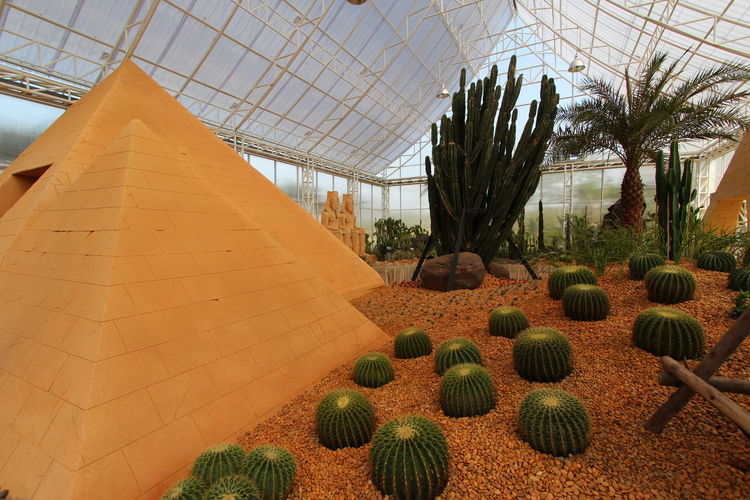 Agriculture Architecture Barrel Cactus Beauty In Nature Botany Built Structure Cactus Day Field Green Color Greenhouse Growth Land Nature No People Plant Plant Nursery Potted Plant Succulent Plant Thorn Tree