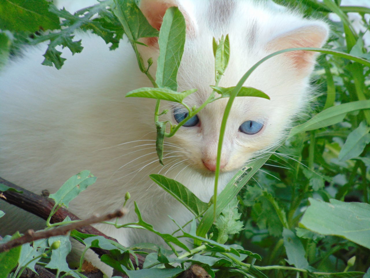 animal themes, pets, one animal, cat, mammal, domestic, feline, animal, domestic animals, plant, domestic cat, vertebrate, leaf, plant part, nature, close-up, growth, animal body part, green color, no people, outdoors, whisker, animal head, animal eye