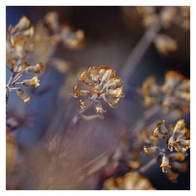 Macro_captures Macro Beauty Macroflowerphotography Naturelovers Nature_perfection Summertime Macroshot Flower Macrophotography Macro Photography Provence Light Outdoors Fujinon 60mm Immortal Fujifilm_xseries