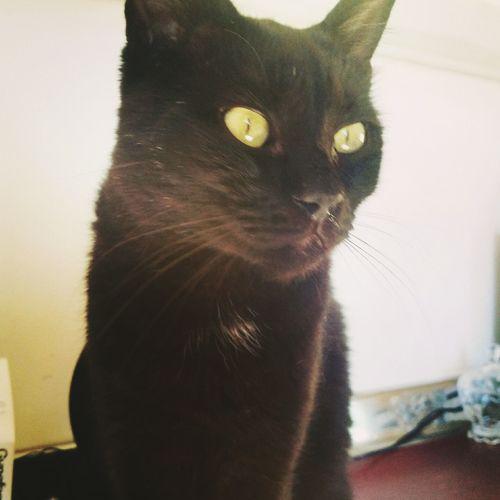 Mycat♥ Love Cat Black Mylife Lamiavita Tiamo Ilmioamore