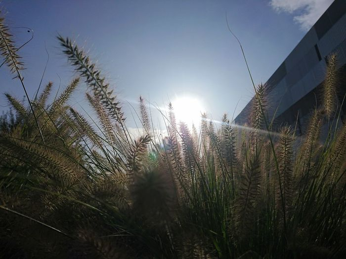 Growth No People Outdoors Sky Nature Day Grass Grassland Building Architecture Architectural Detail Sunlight LenseFlare Lens Flare Sun Light The Week On EyeEm Perspectives On Nature