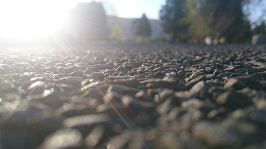 Surface level of leaf