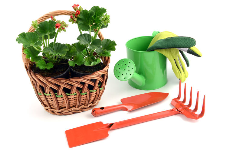 Geranium flowerpot in a basket with gardening tools like garden fork, gloves and shovel, water can. isolated background Gardening Giesskanne Watercan Red Flowers Isolated Red Flower Isolated White Background Gloves Gardening Tools Geranium Red Geranien Red Flower At Its Best Shovel Basket Flowerpot