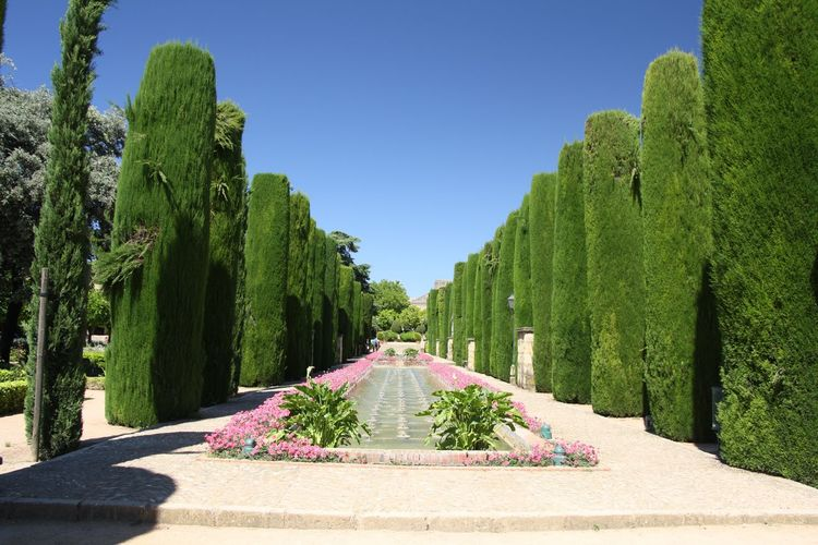 Column trees Pine Trees Plant Tree Sky Nature Green Color Sunlight Growth Clear Sky Garden Day No People Formal Garden Beauty In Nature Park Park - Man Made Space Outdoors Tranquility Blue