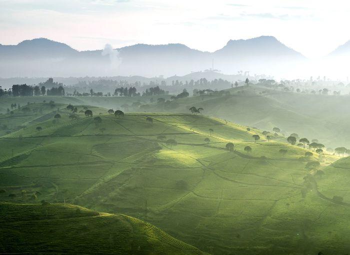 Agriculture Fog