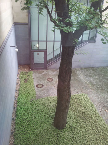 Architecture Backyard Built Structure Day Grass Green Color Nature No People Outdoors Softness Tree