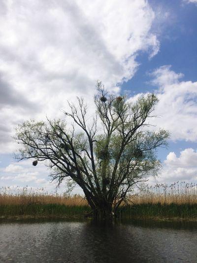 Tree Birds Nest Sky Water Waterfront Oder River Nature Landscape