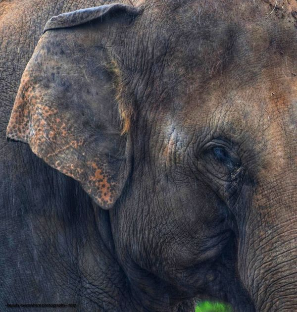 Elephant portrait One Animal Animals In The Wild Animal Wildlife Animal Themes Animal Body Part No People Elephant Outdoors Mammal Close-up Nature