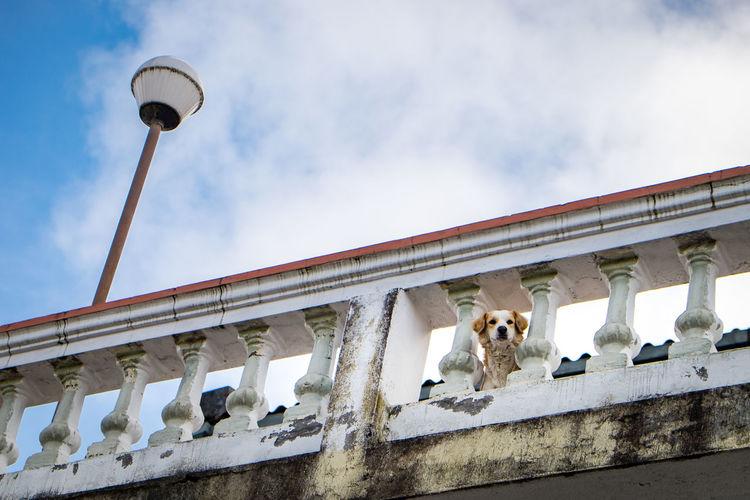 Low angle view of dog on bridge