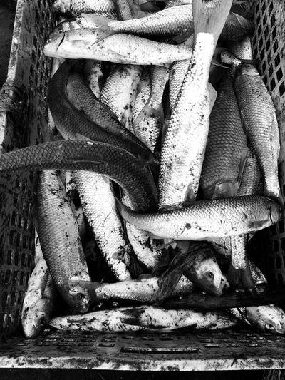 Fish Fishes Fisheye Fishing Fish No People Day Outdoors Close-up