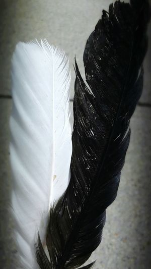 Black & White Feathers Yin & Yang Opposites Attract Check This Out Rhode Island Photography⚓ No People