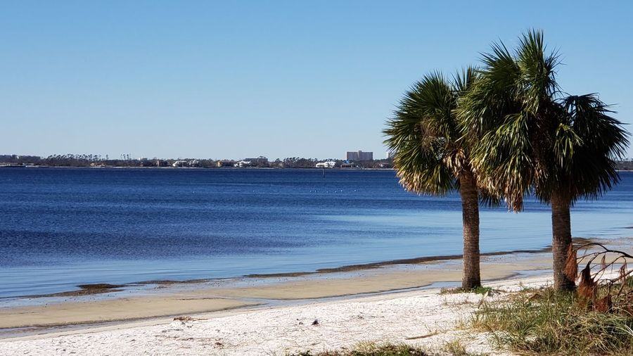 The bay today Tree Water Clear Sky Palm Tree Sea Beach Sand Blue Sunny Sky Coastal Feature Tropical Tree Bay Of Water