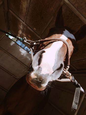 Noseup Wecool Horse Photography  First Eyeem Photo