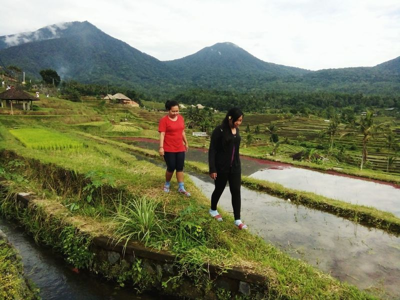 Two People Mountain Rice - Cereal Plant Nature Walking Rice Paddy Agriculture Bali, Indonesia Jatiluwih Rice Terrace