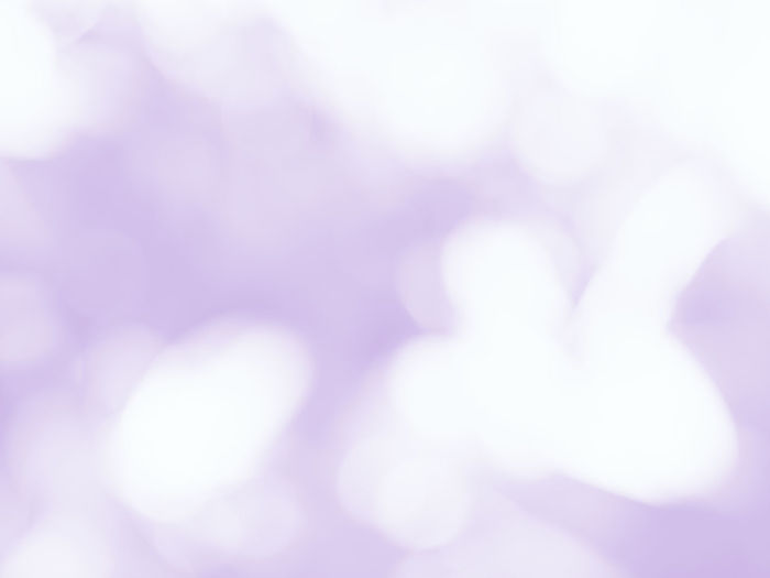 Defocused image of purple flowering plant