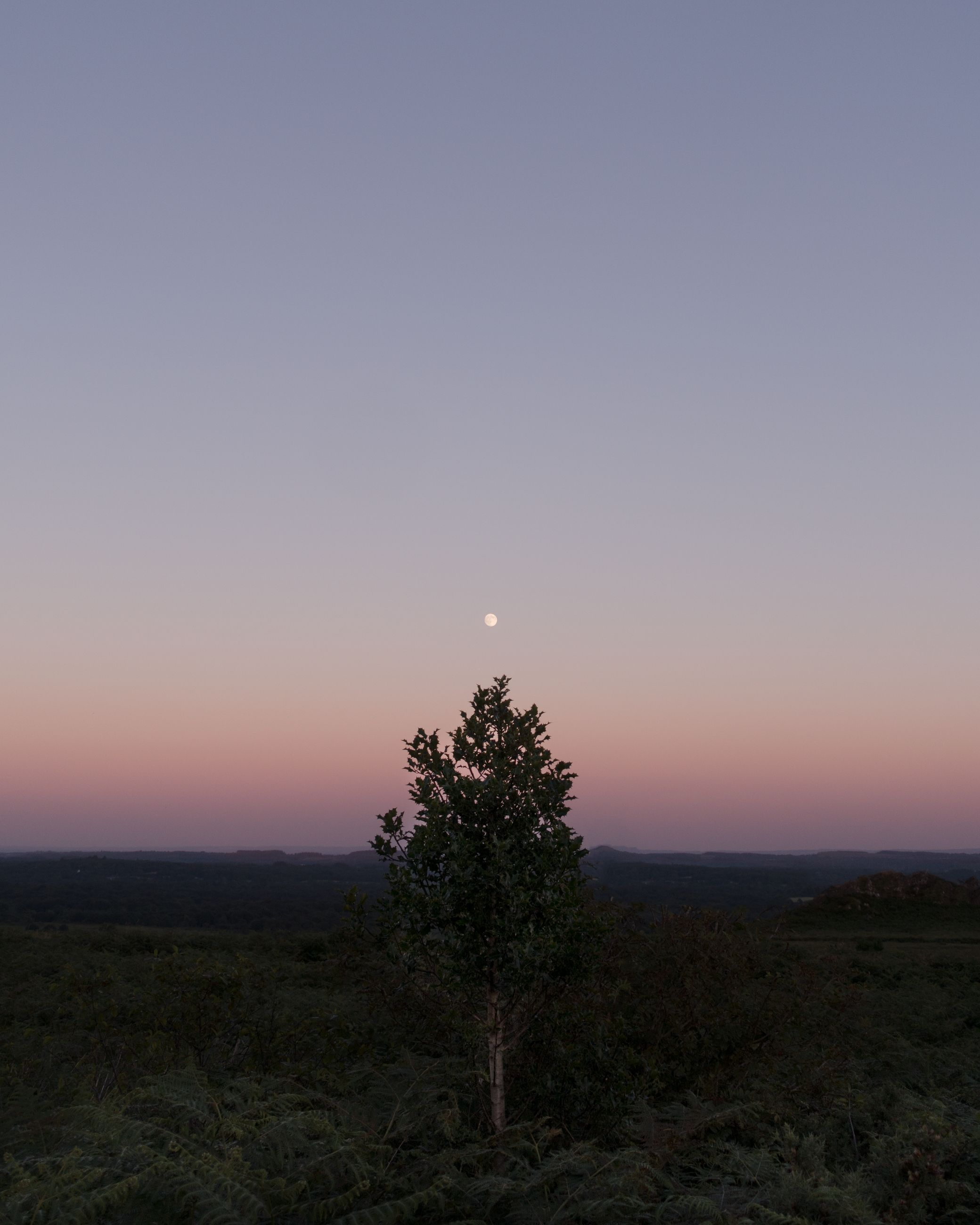 sky, sunset, tranquility, beauty in nature, scenics - nature, tranquil scene, plant, copy space, tree, nature, non-urban scene, no people, idyllic, environment, land, landscape, clear sky, moon, growth, field, outdoors