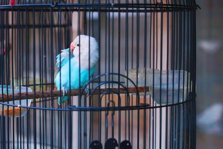 View of bird in cage