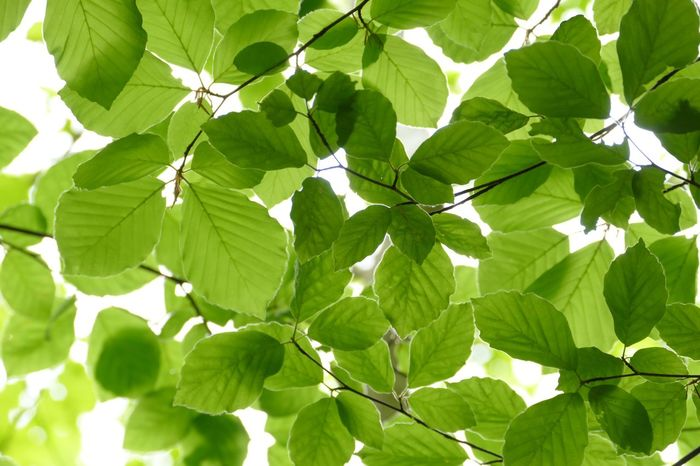 Leaves - Garden & Nature - Green - Nature - Natural Beauty - Creative Light And Shadow - Out & About With Nature - World