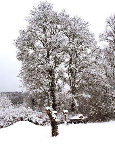 Snow Tree First Eyeem Photo