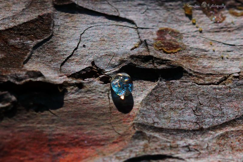 Close-up No People Nature Outdoors Pine Resin Sky Light