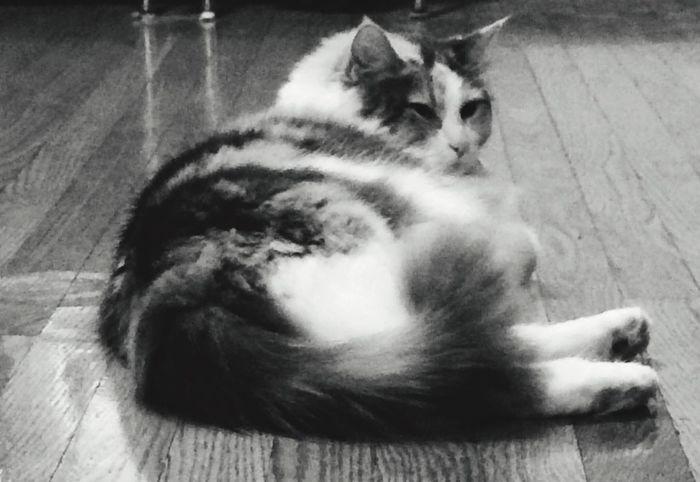 Perfect Model One Animal
