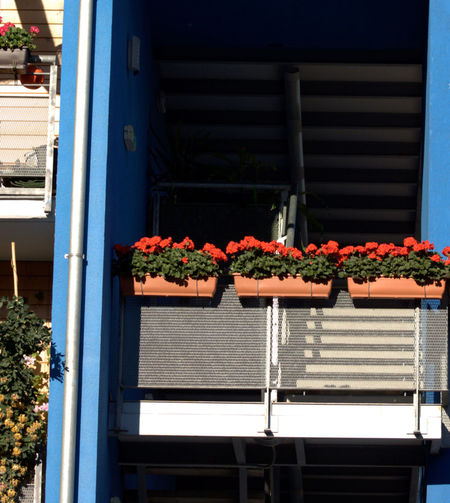 Balcony Built Structure Day Flower Modern Structure No People Outdoors Window Box