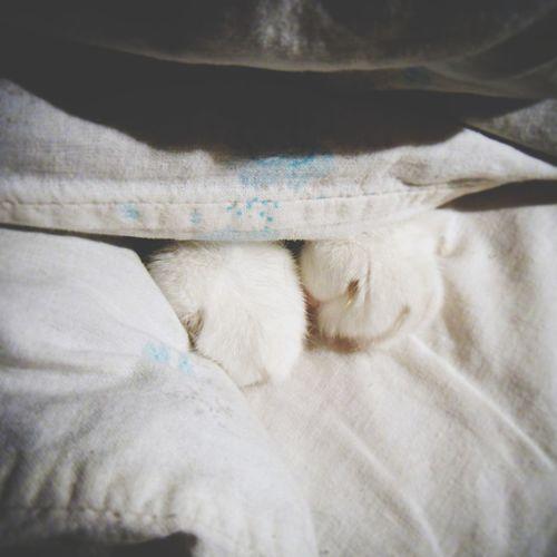 I love it))) Cat Cat's Paw