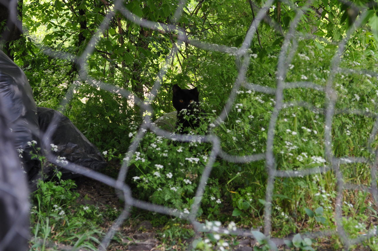Portrait Of Black Cat Seen Through Chainlink Fence In Forest