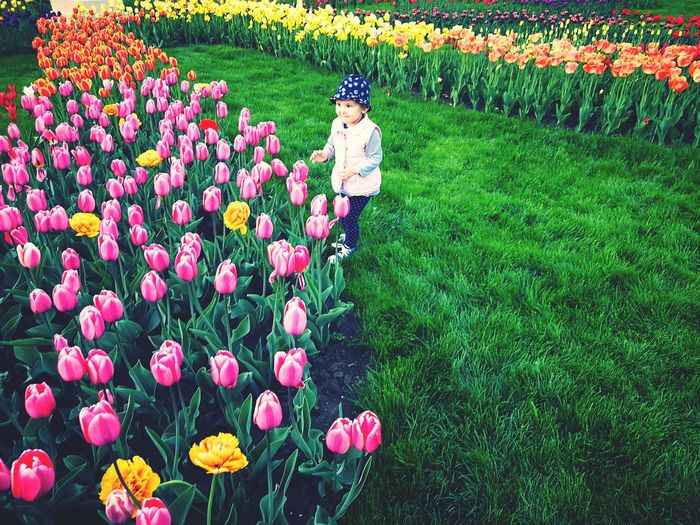 Tulips Purple Tulip Spring Flowers Springtime Spring Multi Colored Multi Colored Flowers Child In Nature Child With Flowers Childhood Kids Toddler  Happiness Nature Beauty In Nature Flower Flower Head Multi Colored Field Grass Green Color Plant Blooming Flowerbed In Bloom Tulip